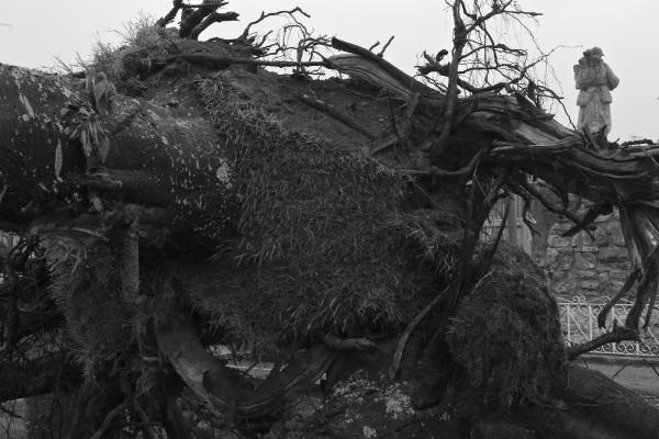 Serge-Philippe-Lecourt-2014-Monument-aux-morts-en-travaux-sous-la-pluie-1