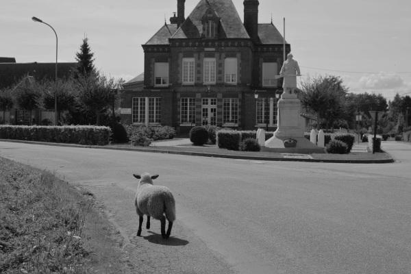 Serge-Philippe-Lecourt-2014-08-Monument-aux-morts Hauville(27)-6