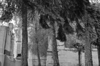 Serge-Philippe-Lecourt-2015-Monument-aux-morts-Mortagne-au-Perche-61-6-noir et blanc