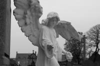 Serge-Philippe-Lecourt-2015-05-monument-aux-morts-Montfarville (53)
