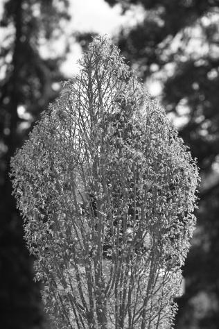 Serge-Philippe-Lecourt-2016-Monument-aux-morts-Nonancourt-27-2